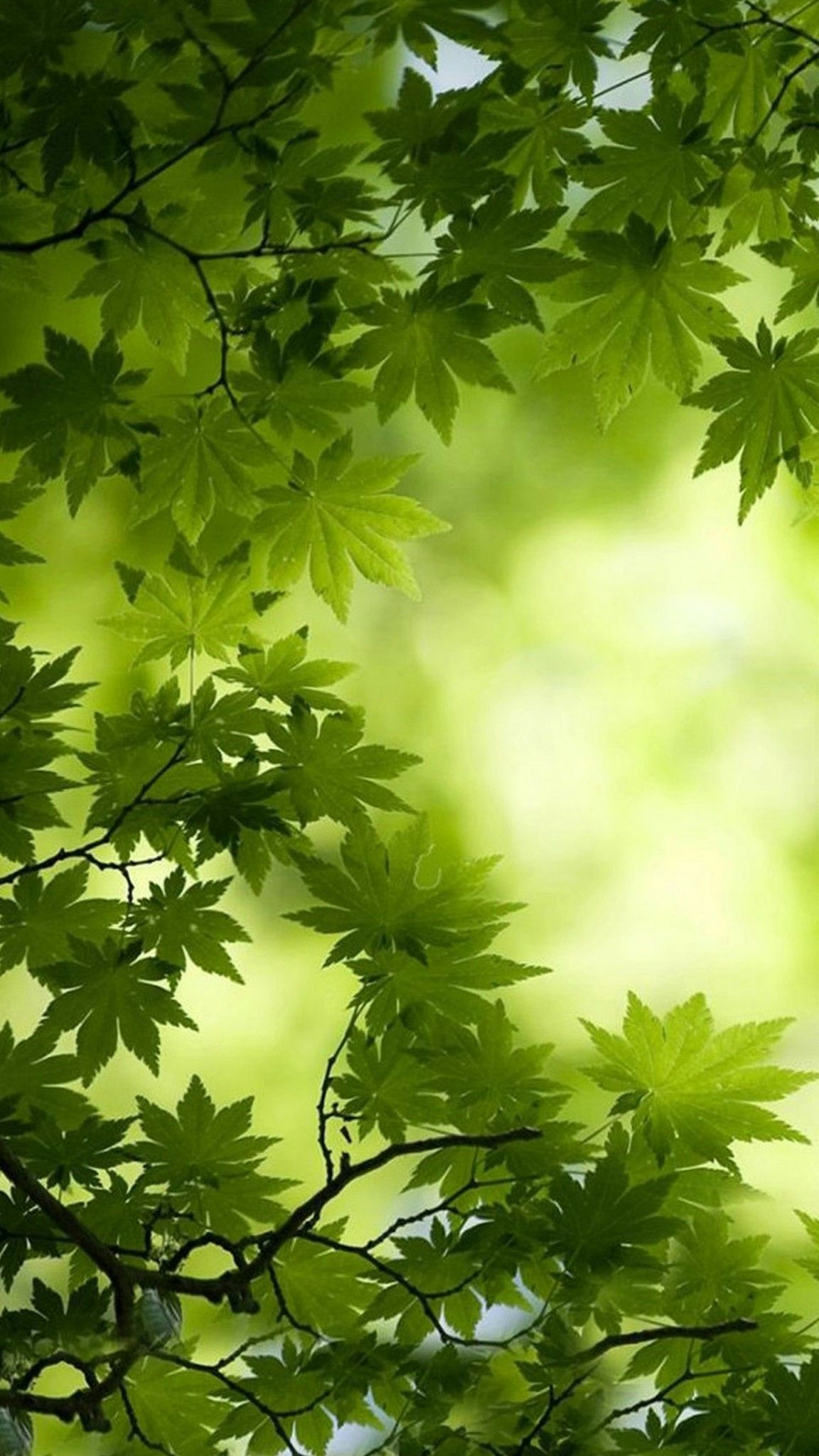 Green Tree Leaves Wallpaper Beautiful Nature Green Nature Nature Pictures