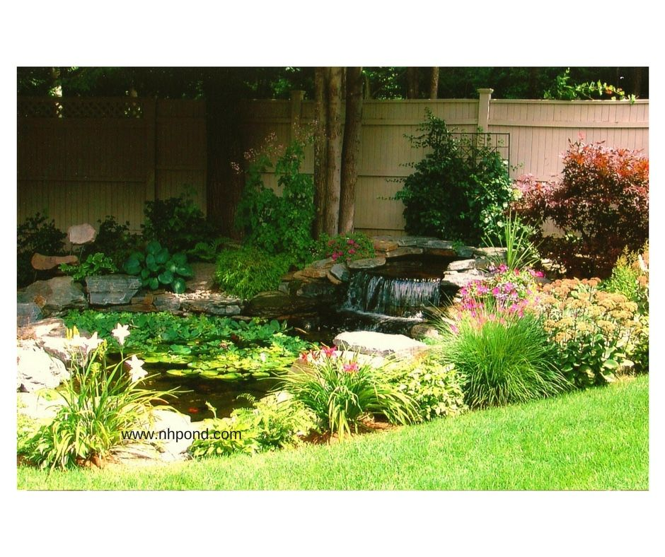 Ecosystem Pond By Nature Scapes Www Nhpond Com Pond Design Pond Water Features