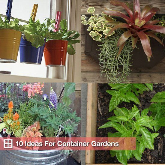 10 Tempting Options For Container Gardens