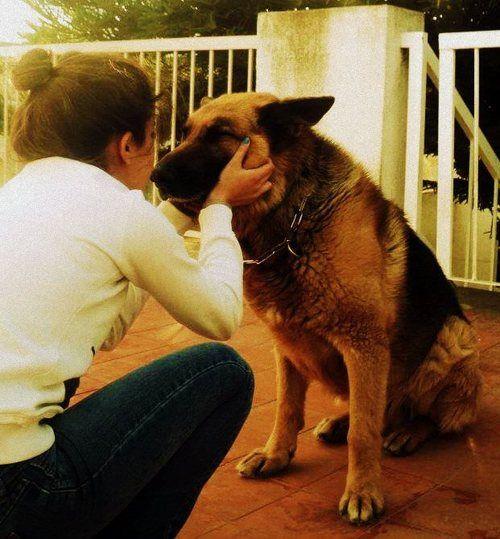 Aww German Shepherd Dogs Girls In Love