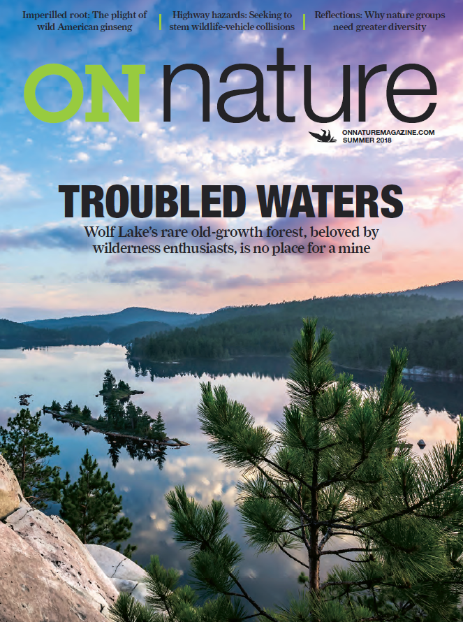 The Summer Issue Of On Nature Is Available Troubled Waters Wolf Lake S Rare Old Growth Forest Beloved By Wild Nature Environmental Magazines Magazine Cover