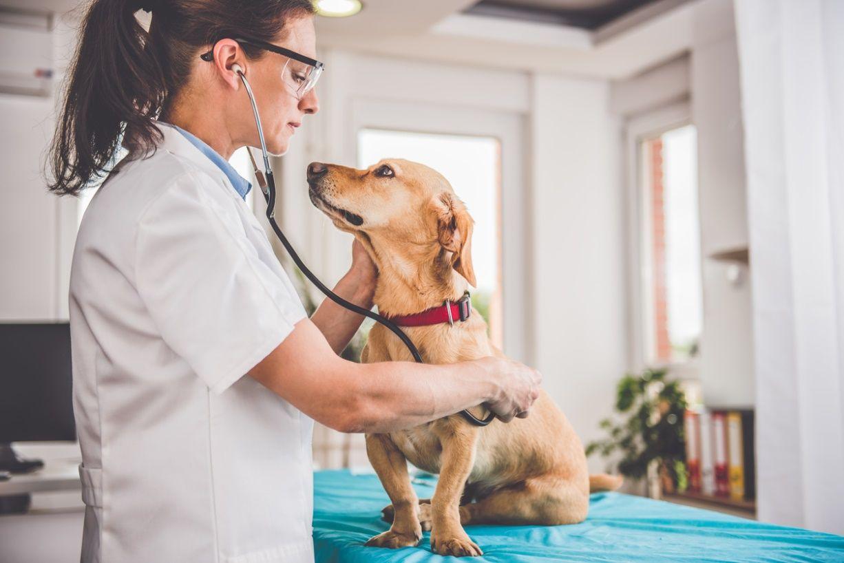Cães e gatos conheça as doenças que mais afetam os pets
