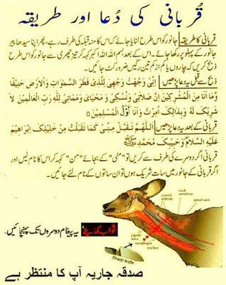 Qurbani Ki Dua Or Tareeqa | hr | Islamic dua, Islam quran