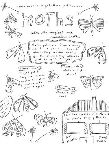 Free Printable Coloring Page And Fact Sheet About Moths