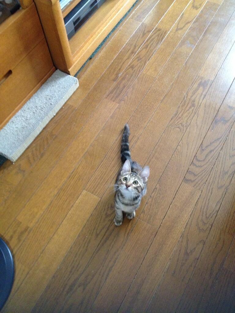 Twitter / k12410991: @とことん猫画像