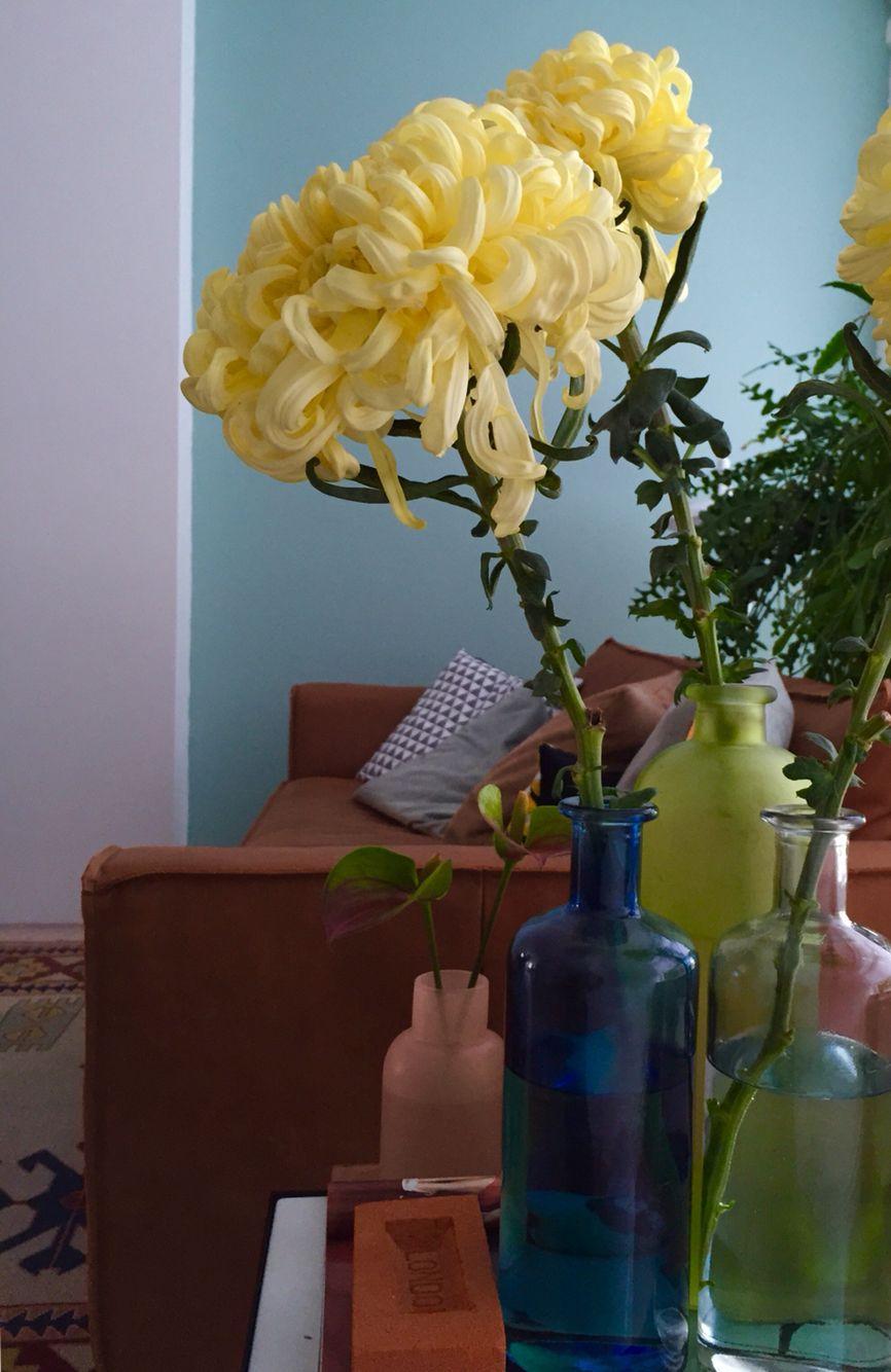 Mega Chrysanthemums