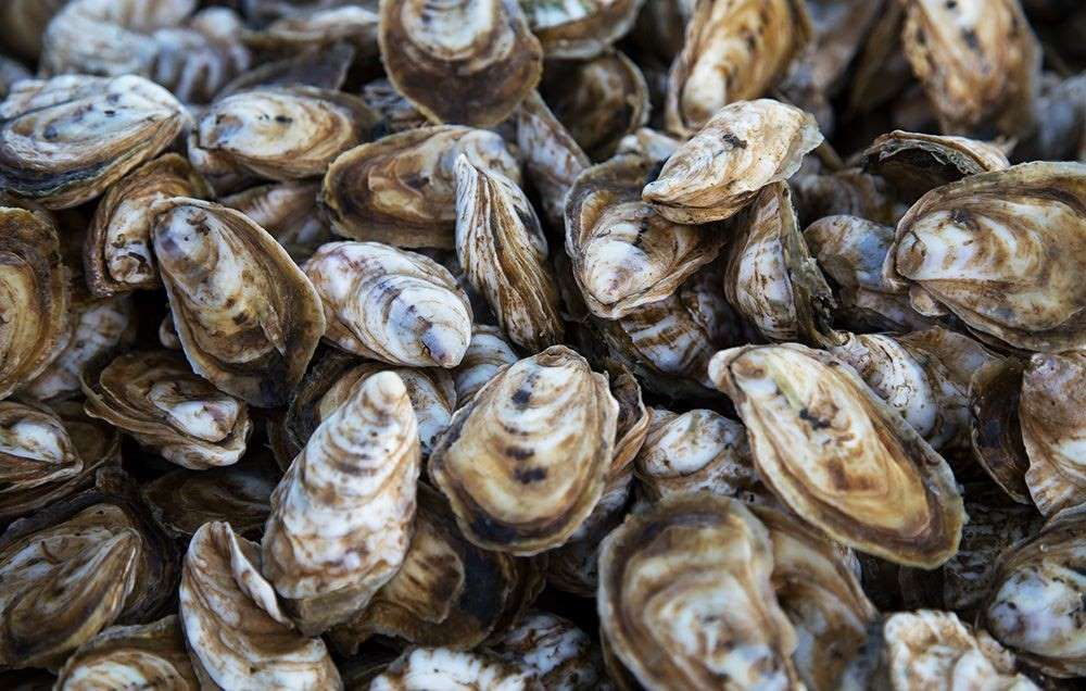 How Long Does It Take To Get Sick From Oysters