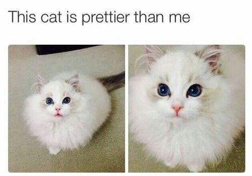 Image via We Heart It https://weheartit.com/entry/154728397/via/19994183 #cat #cute #fancy #fluffy #funny #lol #pretty