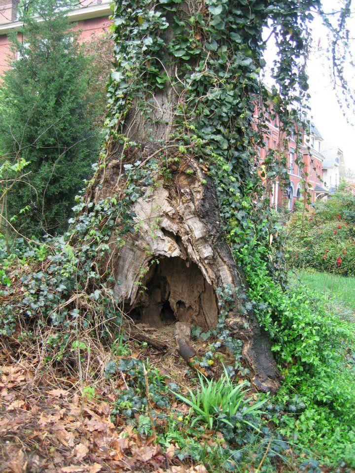 Fairy Door On 6th St In Old Louisville Kentucky Fairy Garden