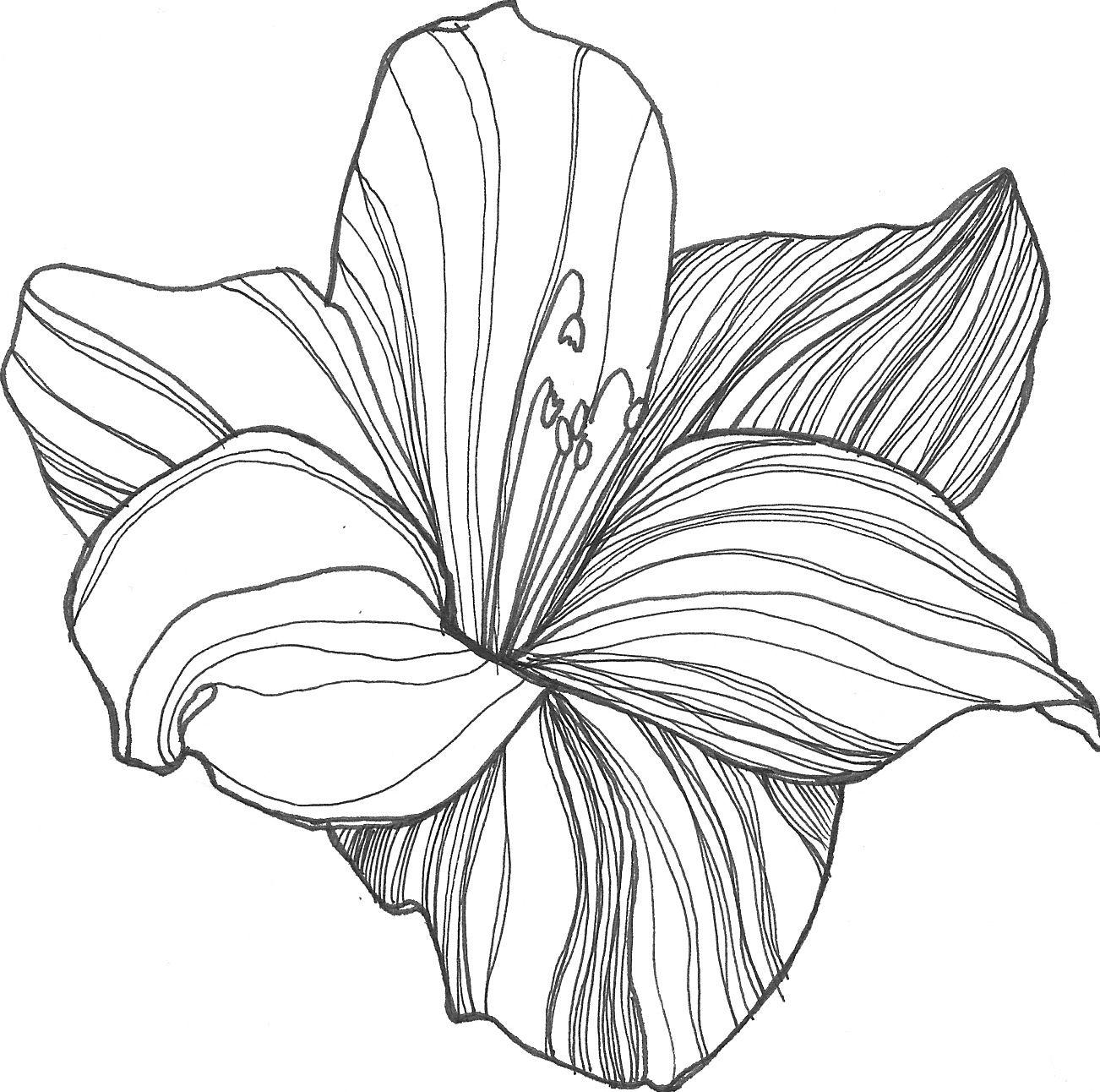 Uncategorized Flowers Draw nicole illustration flower power patterns pinterest power