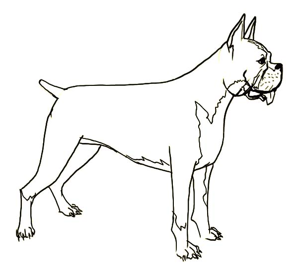 Hideous Boxer Dog Coloring Pages Best Place To Color Dog Coloring Page Boxer Dogs Coloring Pages