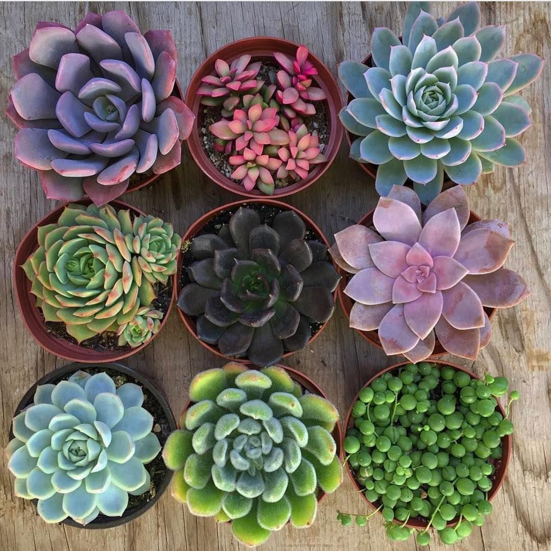 We ship succulents fairyblooms on instagram uc off code