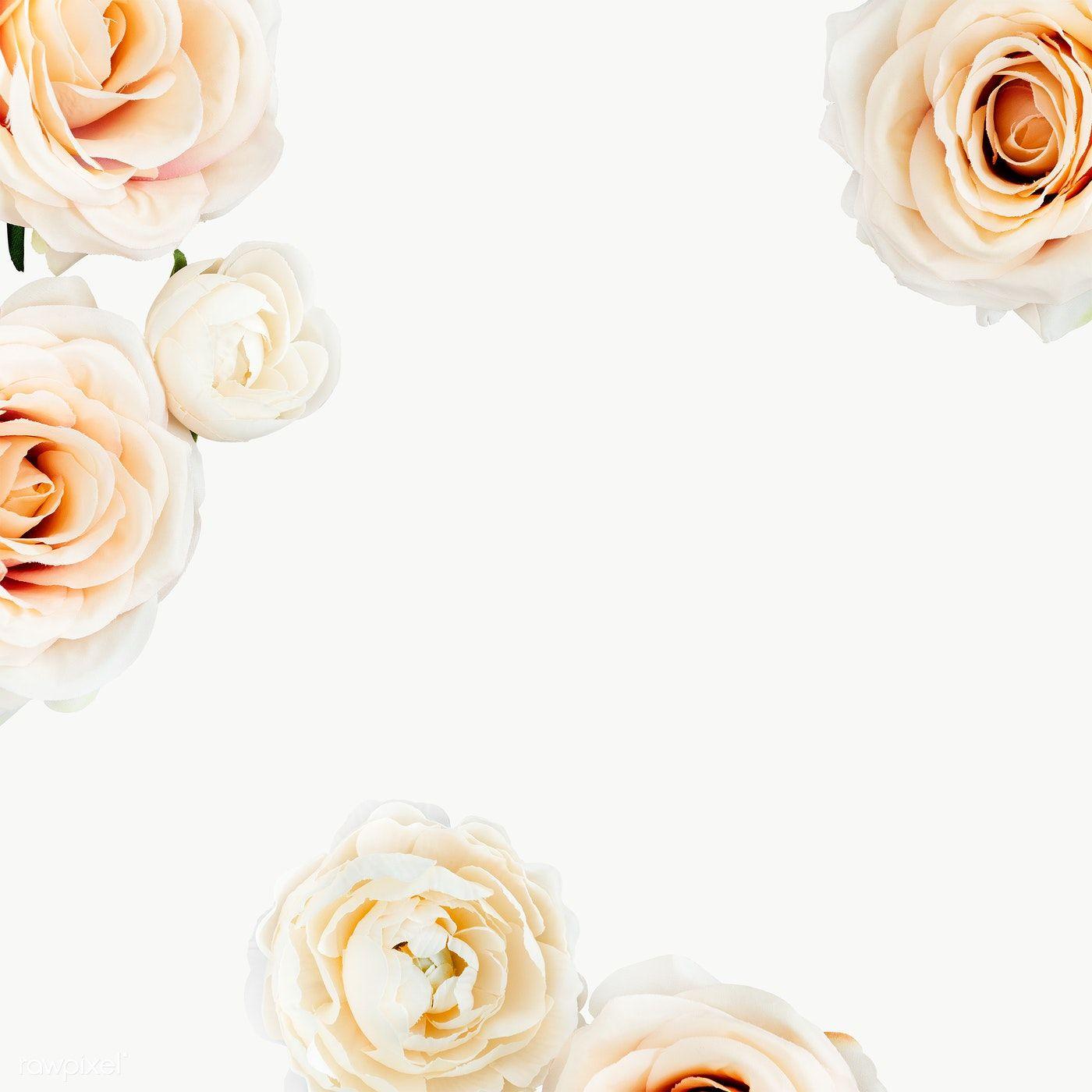 White Rose Frame Transparent Png Premium Image By Rawpixel Com Nam White Roses White Anemone Flower Green Leaf Decor