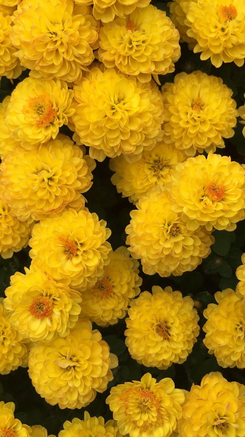 pin by djanik on fotoramki in 2020 flower iphone wallpaper yellow wallpaper tumblr backgrounds flower iphone wallpaper yellow