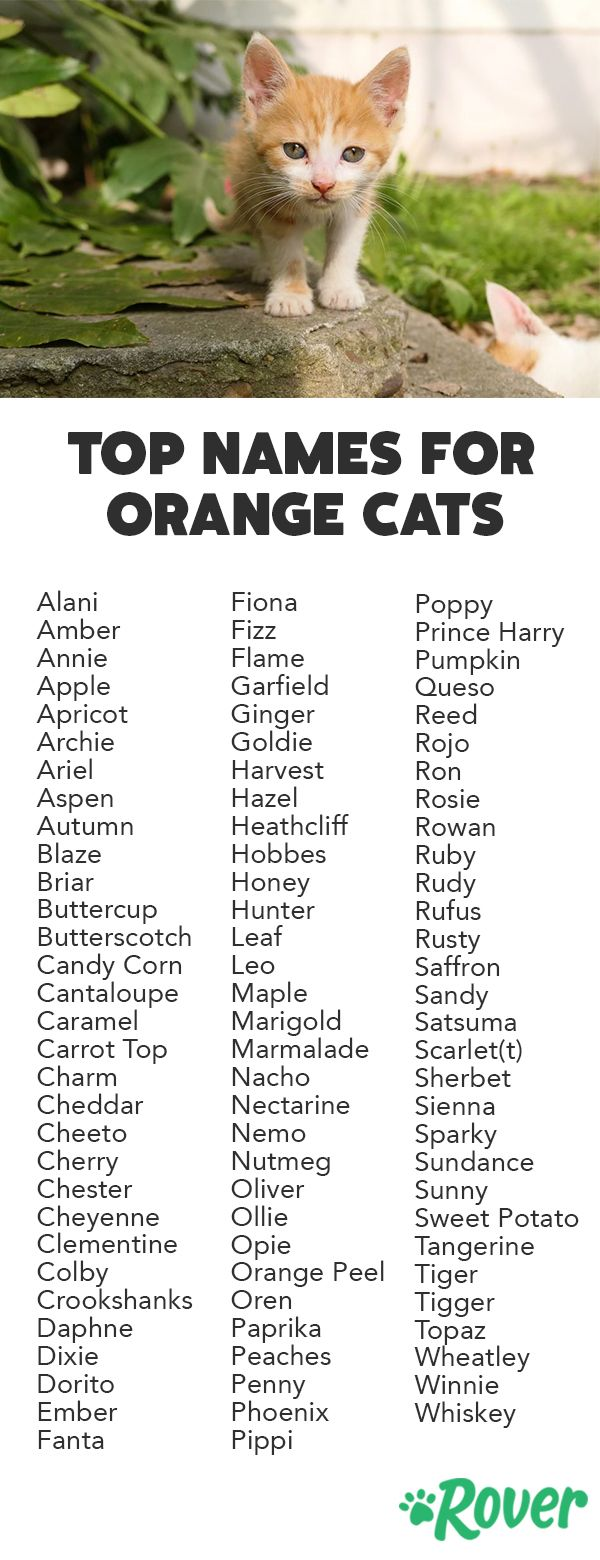 100 Best Orange Cat Names For 2019 With Popularity Rankings Cute Cat Names Cat Names Kitten Names
