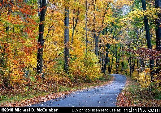 Laurel Summit Road Fall Foliage