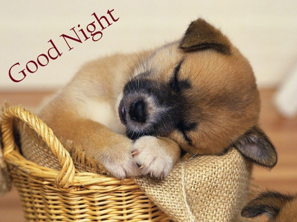 Cute Good Night Images Good Night Images Pinterest Cute