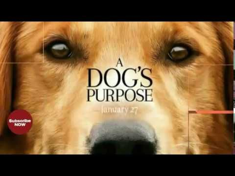 A Dog's Purpose - Official Trailer ♥2017 (HD)info