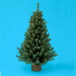 Here Are Some Great Tips On How To Keep A Real Christmas Tree Alive Longer This Year You Wil Christmas Tree Stand Pine Christmas Tree Christmas Tree Stand Diy