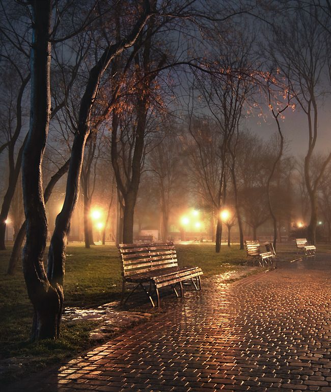 Rainy Park Bench Peacefulllll Beautiful Landscapes Beautiful Nature Night Photography