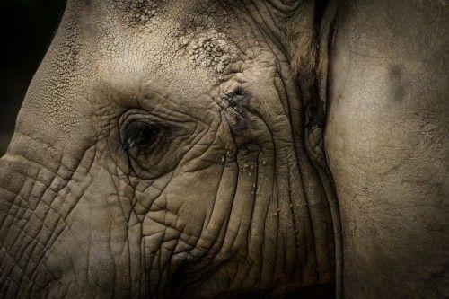Elefante Africano / African elephant by Joskar Armas