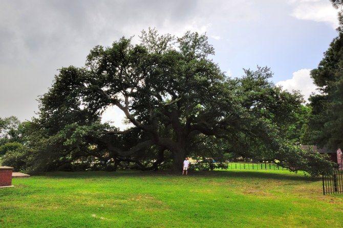 Hampton University's Emancipation Oak