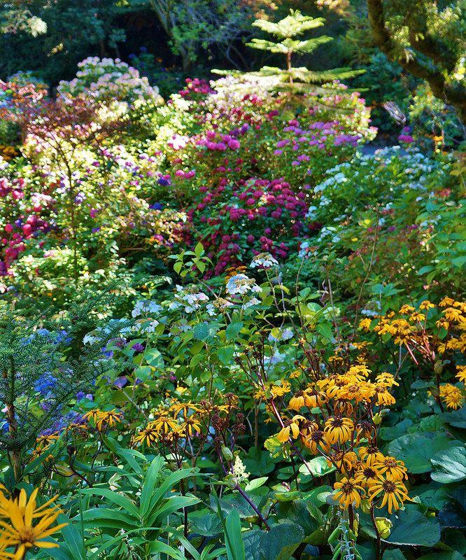 Hydrangea Garden With Farfugium At Wellington Botanic Garden Nz Hydrangea Garden Hydrangea Botanical Gardens