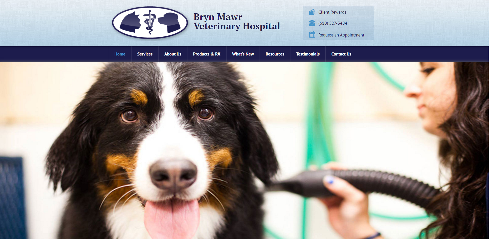 Bryn Mawr Vet Veterinary Hospital Veterinary Web Design Projects