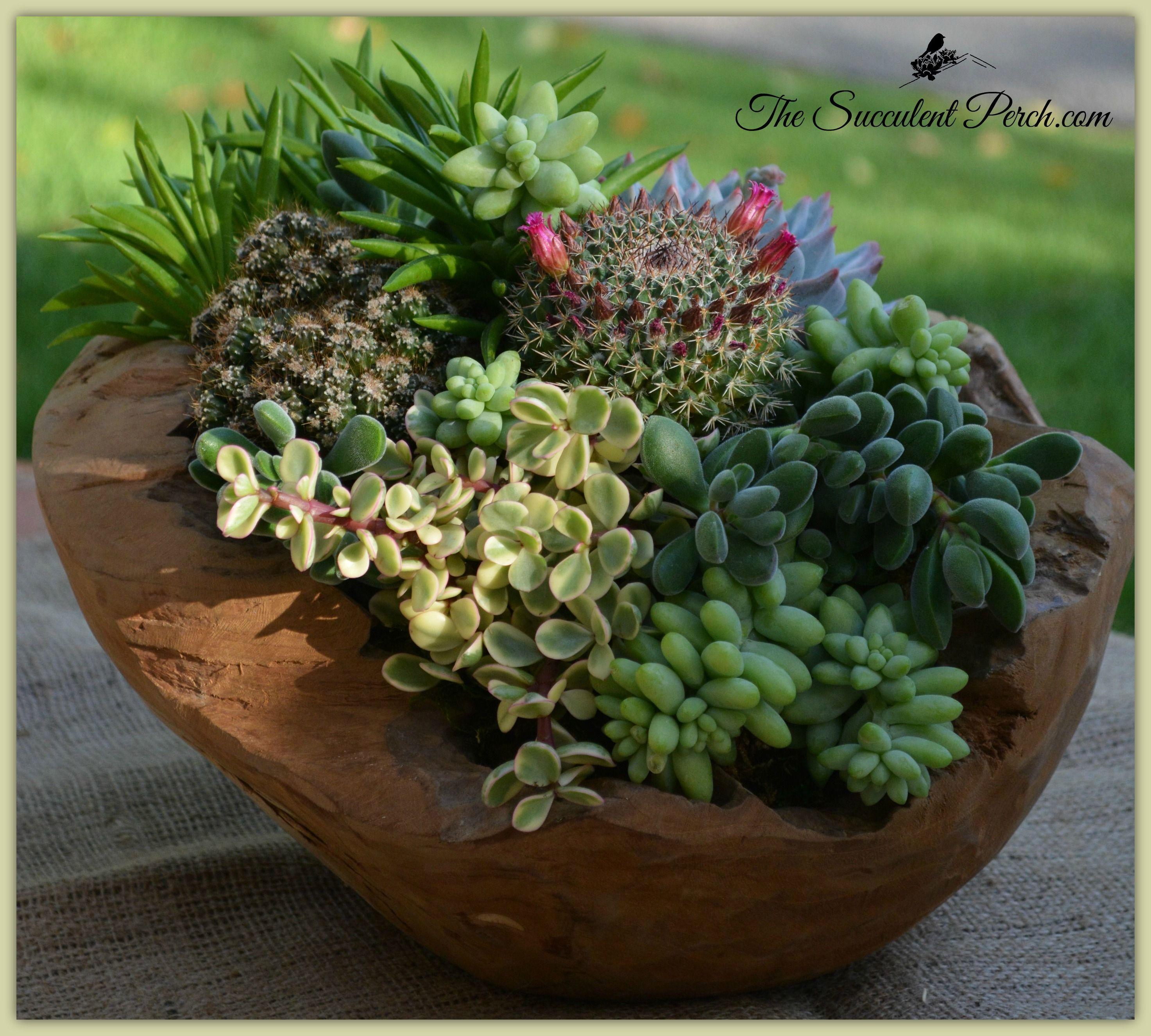 The Succulent Perch Www Thesucculentperch Com Www Facebook Com
