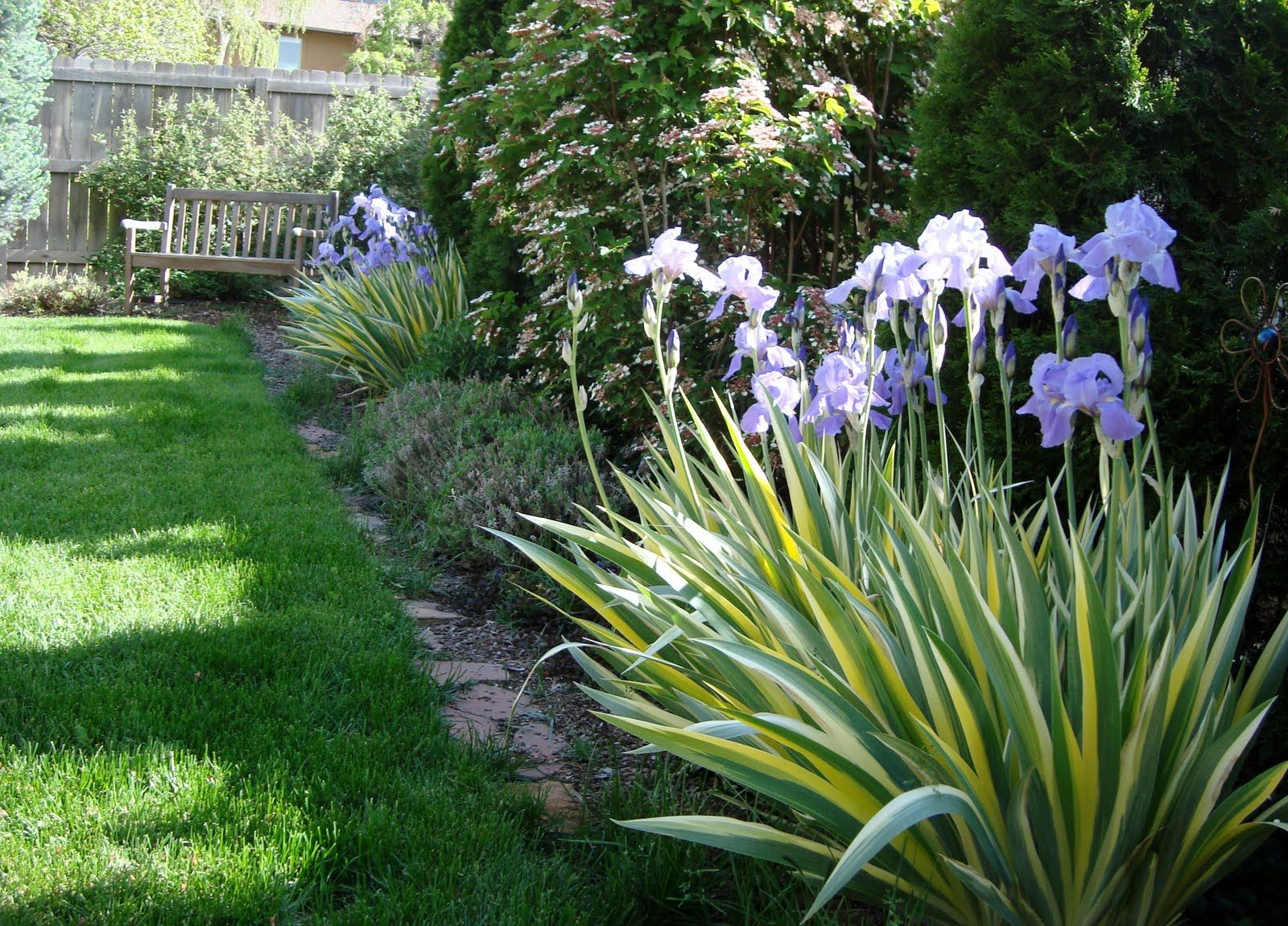 Landscaping along a fence ideas with photos am a big fan for Landscape plants for full sun