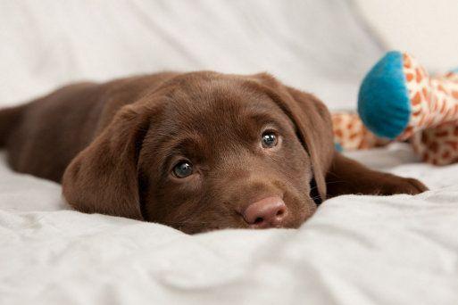 Fotos de cachorros de perro... ¡Qué preciosos son todos! ¿Con cuál te quedas?