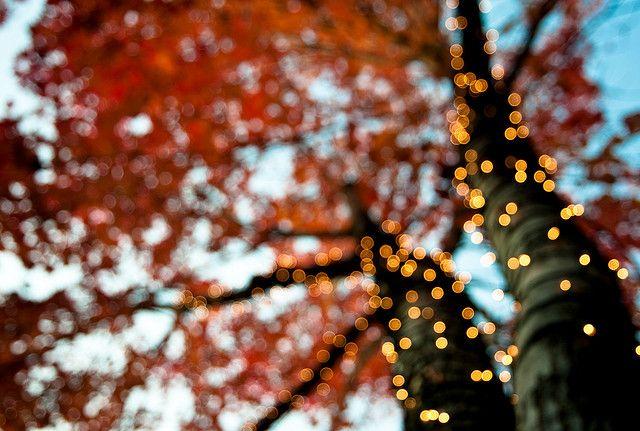 lovelight by nardell on Flickr.