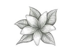 Jasmine Flower Drawings Bing Images Jasmine Flower Tattoos