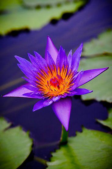 Lotus delish!
