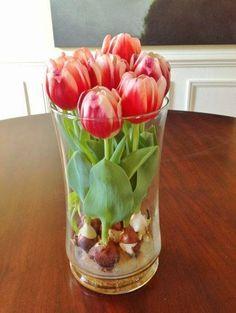 faire fleurir des bulbes de tulipes en vase fleurs. Black Bedroom Furniture Sets. Home Design Ideas