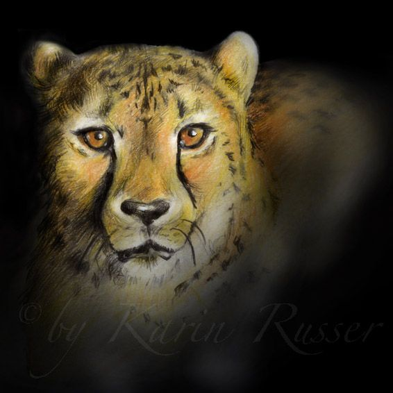 """""""What's up?"""" · Cheetah Drawing by Karin Russer · Technique: Colored Pencils · Original Size: 10x10 cm ·"""