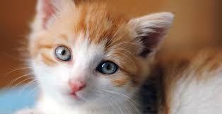 Resultado de imagem para fotos de gatos recem nascidos