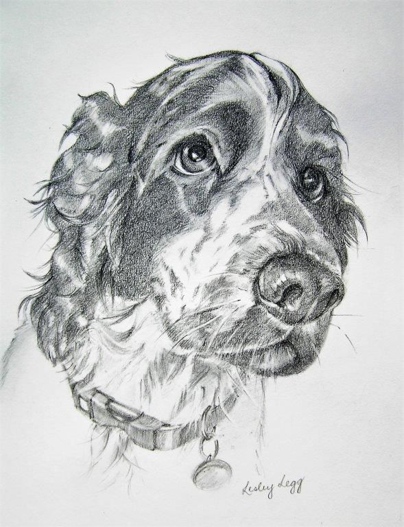 Rory Pencil drawing of a cocker spaniel