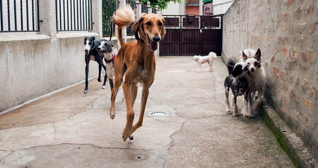 Pin On Psi Koji Se Ne Linjaju Top 10 Pasmina Pasa Koje Se Ne