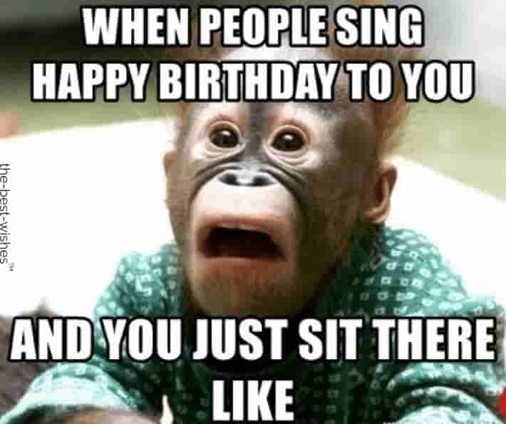 Top 100 Funniest Happy Birthday Memes Most Popular Funny Animal Faces Monkeys Funny Monkey Pictures