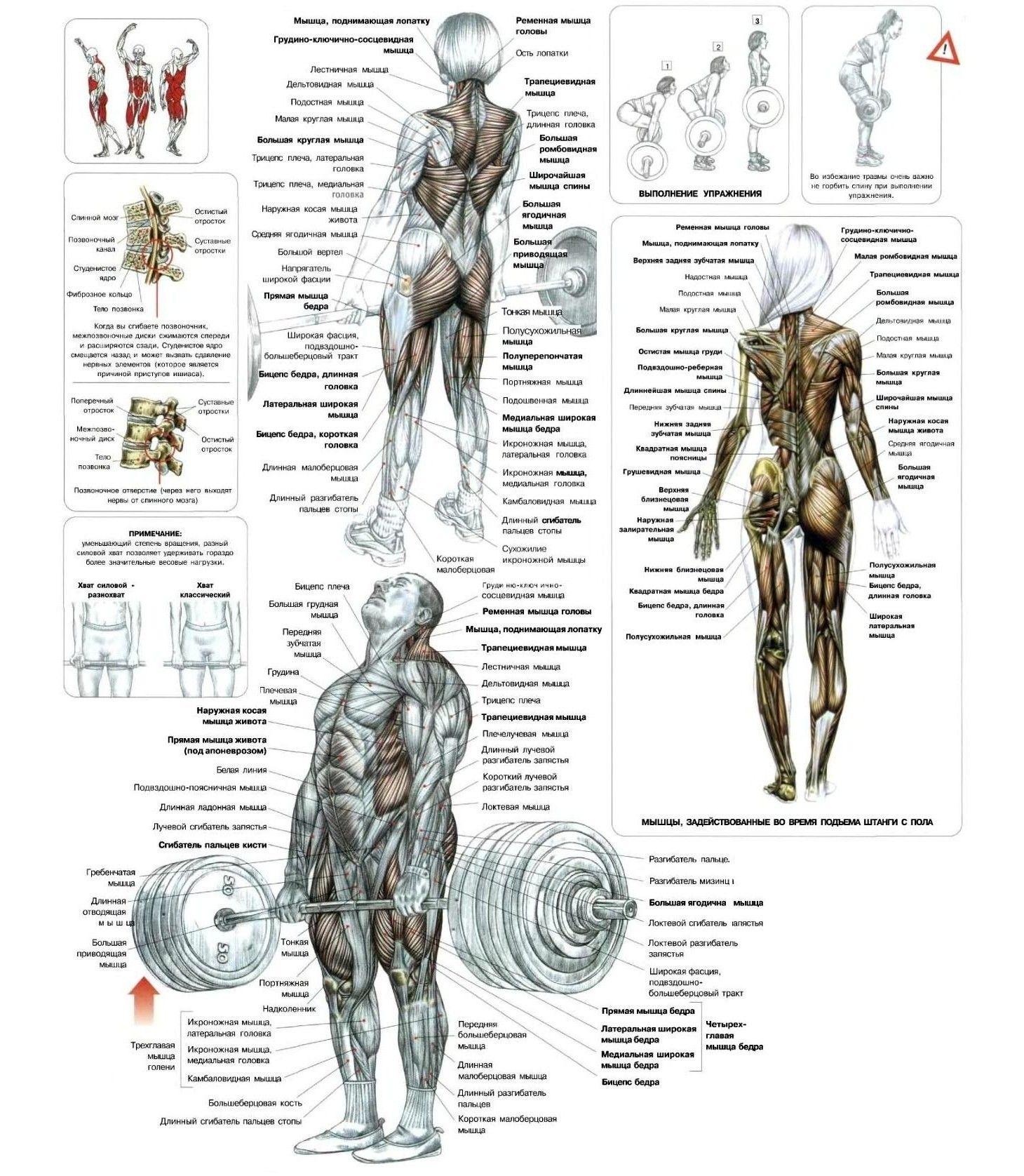 Самые эффективные упражнения для ягодиц! | Sport ...