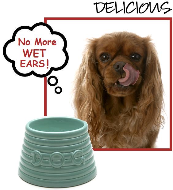 Spaniel Bowls King Charles Dog Cavalier King Charles Cavalier Dog