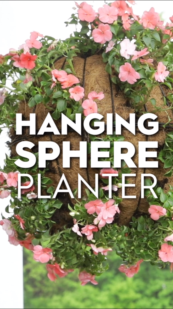 How to Plant a Sphere Hanging Basket