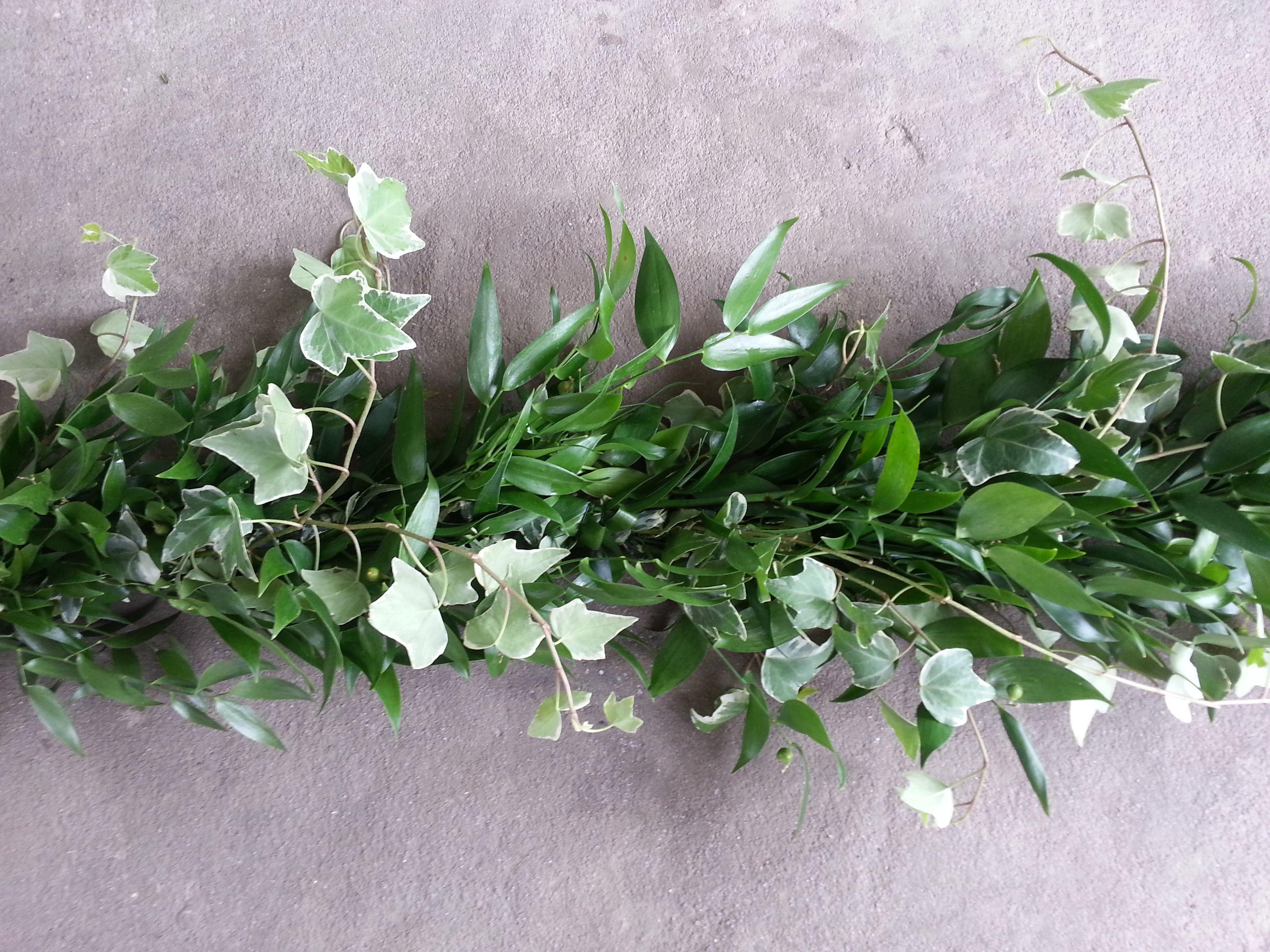 Italian Ruscus Variegated English Ivy