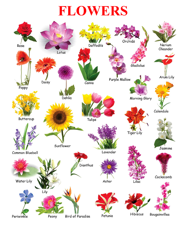 Flowers Name Chart Toppers Bulletin In 2020 Flower Images With Name Flowers Name List Flower Names