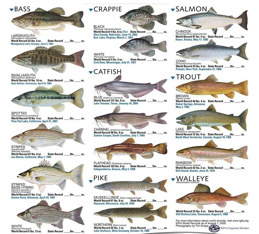 List Of Freshwater Aquarium Fish Fish Chart Freshwater Aquarium Fish Aquarium Fish