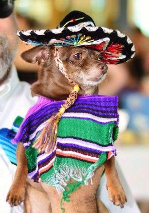 San Antonio Dog Life Halloween Costume Winners And Runner Ups