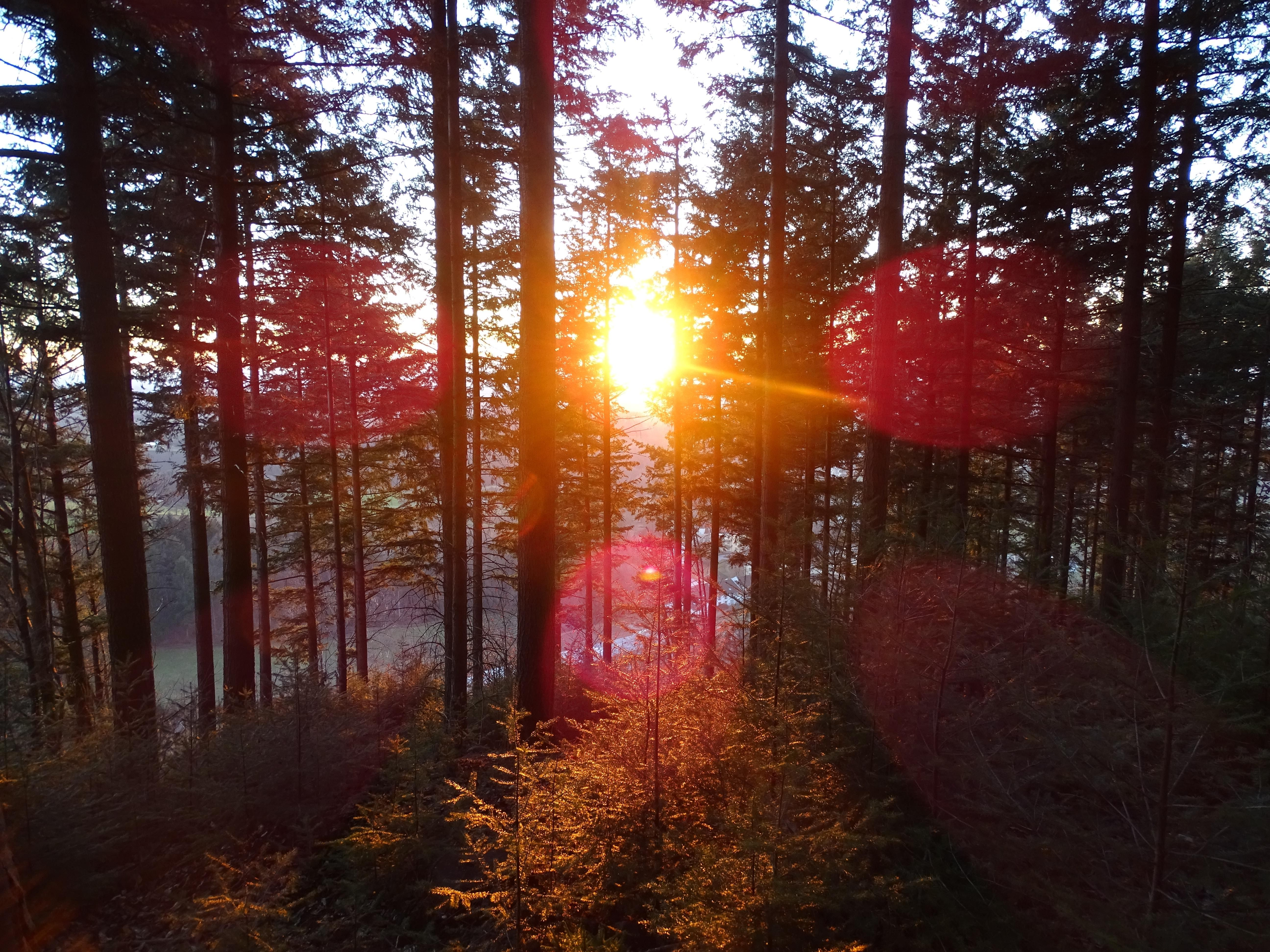 Sunset In Black Forest 5184x3888 Oc Unedited Http Bit Ly 2egwtz3 With Images Landscape Photos Outdoor Photography Landscape Photography