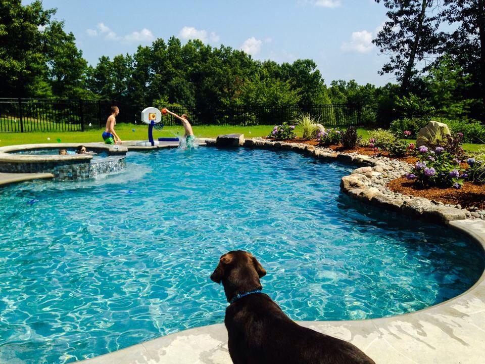 Gunite Pool With Natural Stone Edge Blue Granite Pebble Sheen Backyard Pinterest Gunite