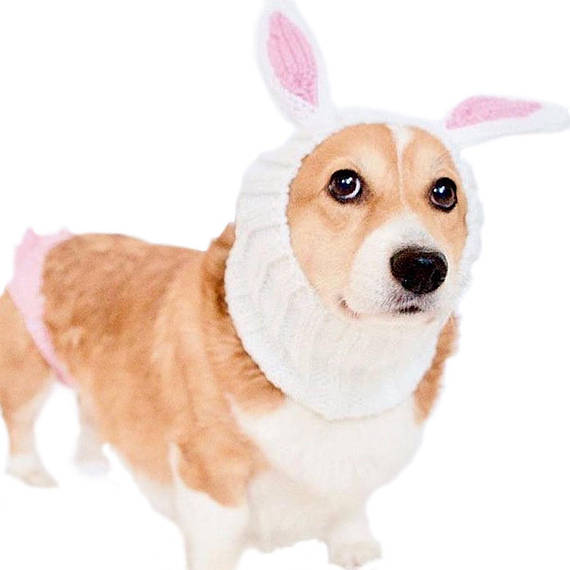 3794fb1d9f1 Bunny Rabbit Dog Snood